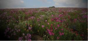 Сохранение и улучшение терруаров, биологического разнообразия и ландшафтов